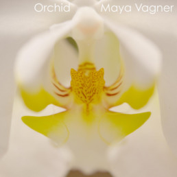 white and yellow orchid flower
